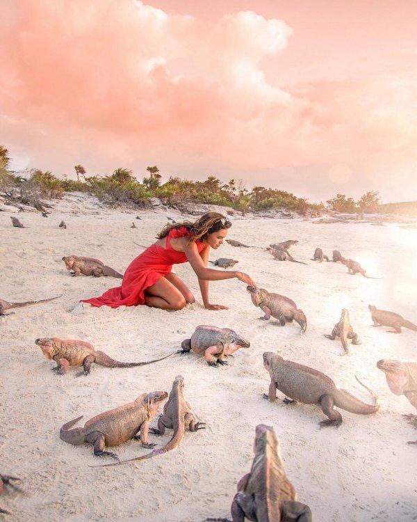 Wildlife, Tourism, Vacation, Illustration, Reptile,