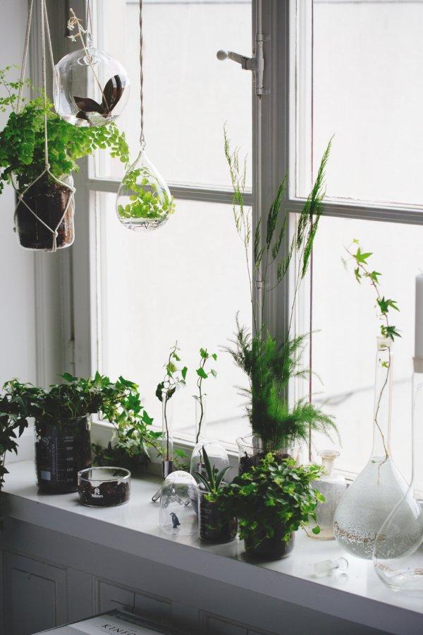 flower arranging,floristry,green,ikebana,plant,