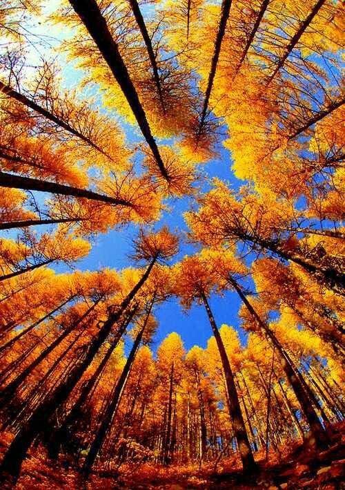 nature, sky, tree, woody plant, deciduous,