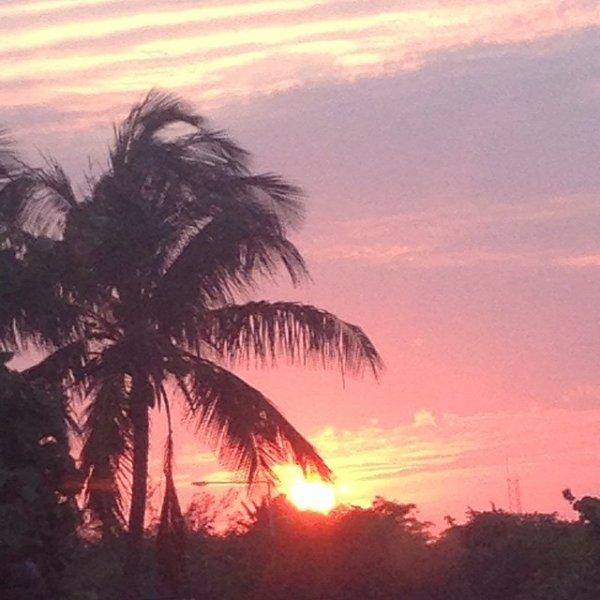 Sky, Tree, Sunset, Palm tree, Afterglow,
