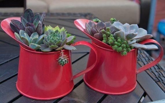 red,flower arranging,plant,flower,floristry,