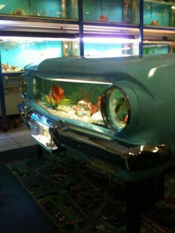 car,vehicle,automotive exterior,bumper,aquarium,
