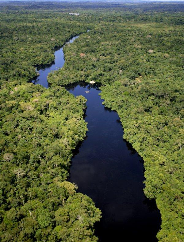 Amazon River and Rainforest, Brazil