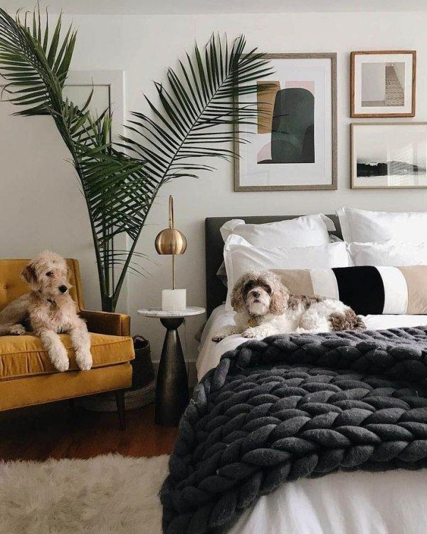Bedroom, Furniture, Room, Bed, Bed frame,