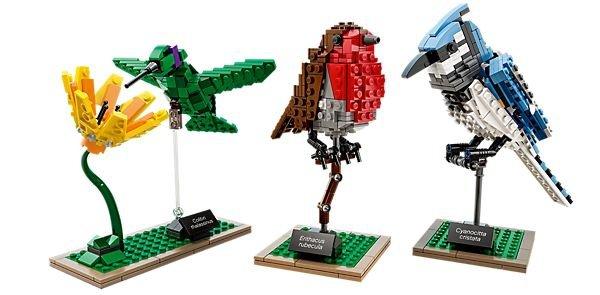 Trio of Birds