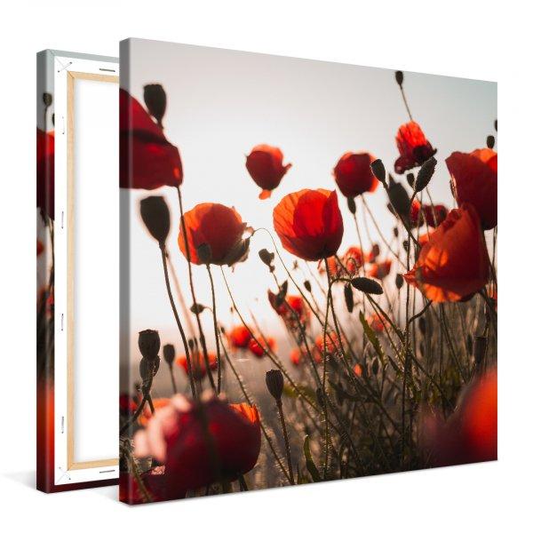Coquelicot, Modern art, Red, corn poppy, Poppy,