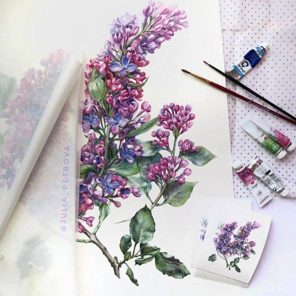 Flower, Lavender, Lilac, Purple, Plant,
