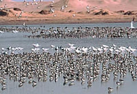 Banc D'Arguin National Park, Mauritania