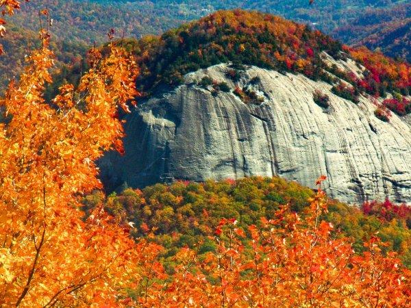 nature, wilderness, leaf, autumn, ecosystem,