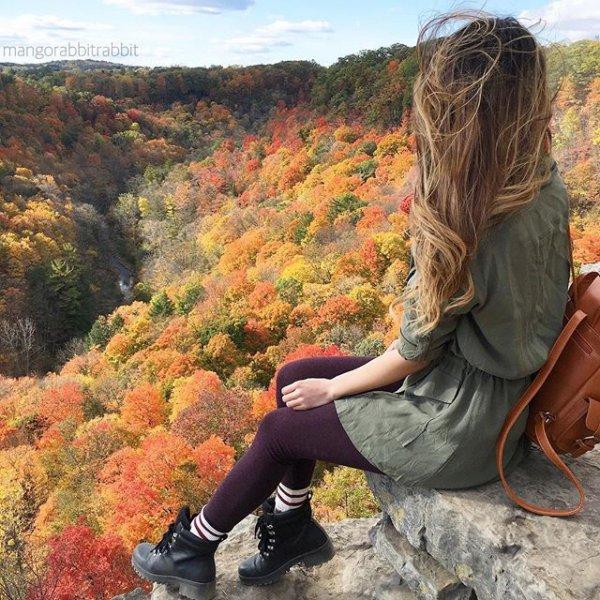 leaf, autumn, season, mangorabbitrabbit,