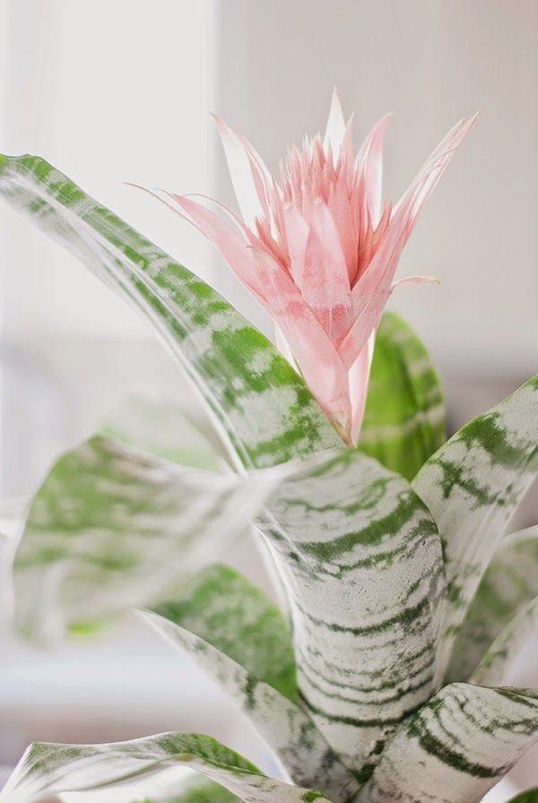 flower, pink, plant, flowerpot, flora,