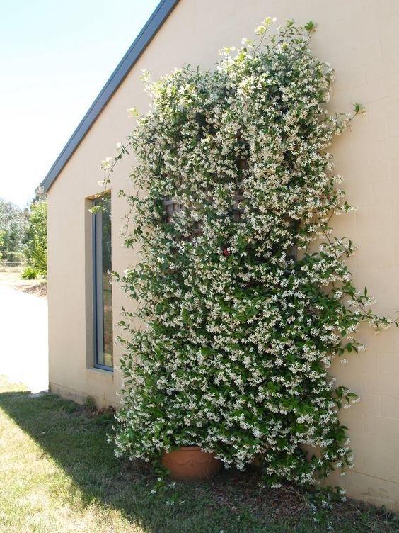 Tree, Plant, Flower, Shrub, Woody plant,
