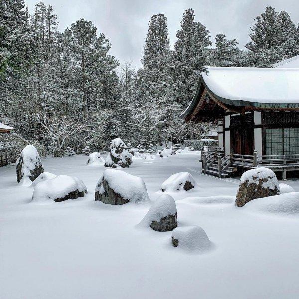 snow, winter, freezing, tree, ice,