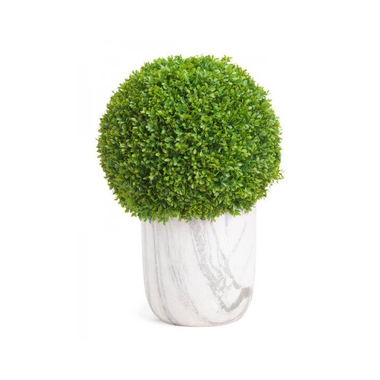 plant, tree, grass, land plant, woody plant,