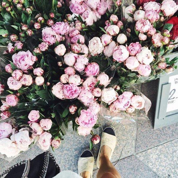 flower, plant, pink, flowering plant, rose family,