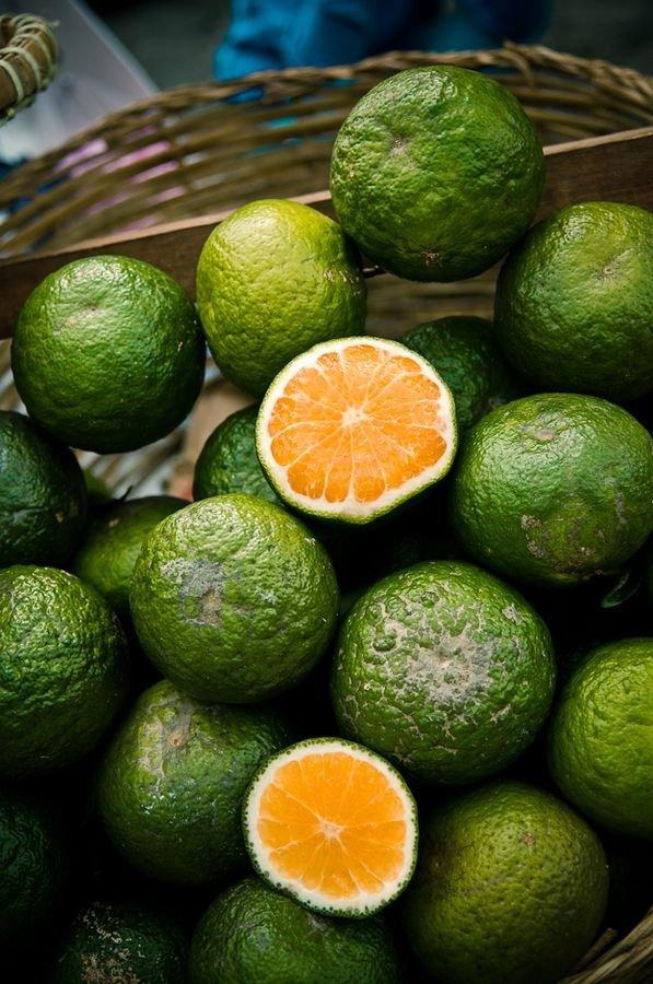 Lime, Key lime, Persian lime, Citrus, Rangpur,