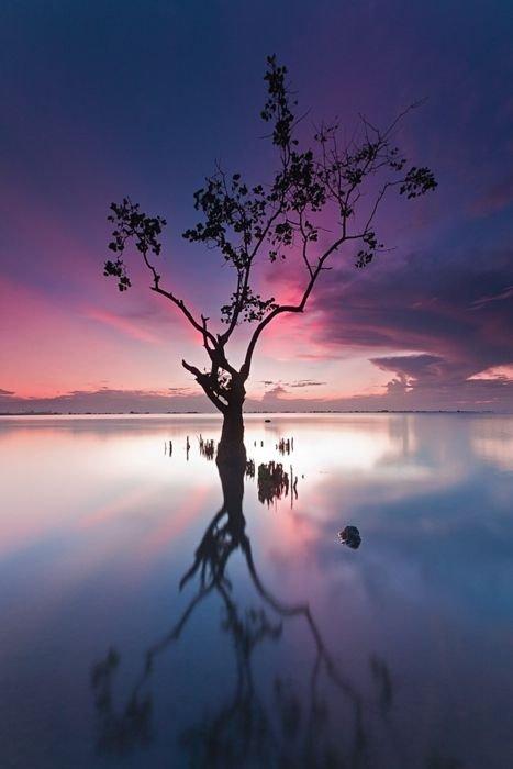 sky,reflection,nature,tree,sunrise,