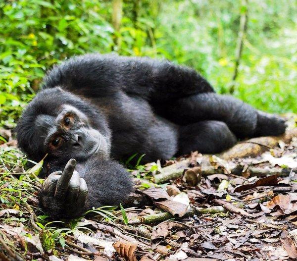 mammal, vertebrate, wildlife, fauna, primate,