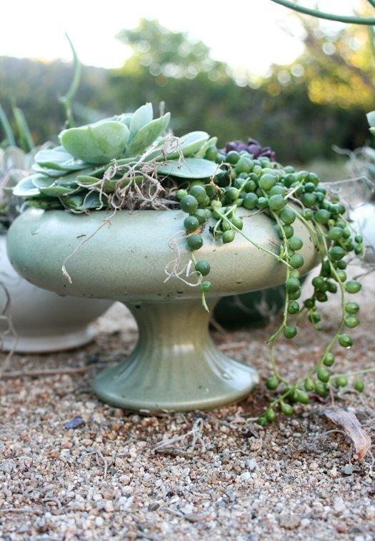 plant,tree,flower arranging,flower,land plant,