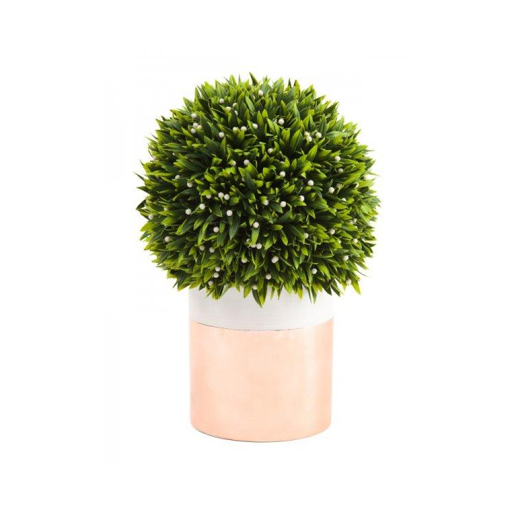 tree, plant, grass, flower, land plant,