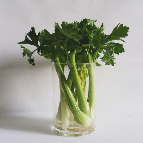 vegetable, produce, leaf vegetable, flowerpot, food,