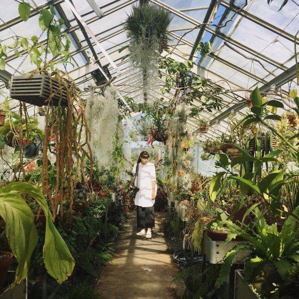 plant, greenhouse, flora, arecales, botanical garden,