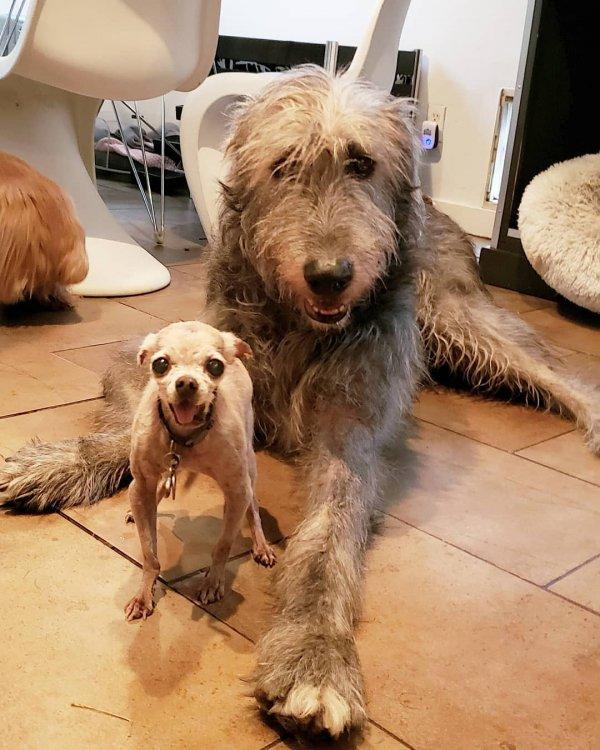dog, dog breed, dog like mammal, snout, sapsali,
