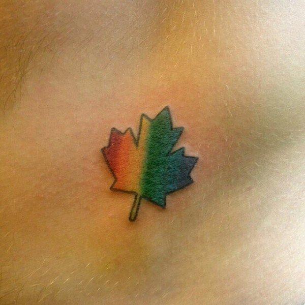 green,plant,leaf,maple leaf,close up,
