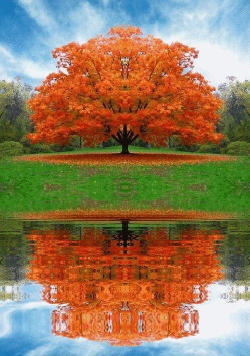 reflection, nature, leaf, tree, autumn,