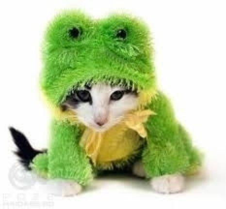 Frog-Cat