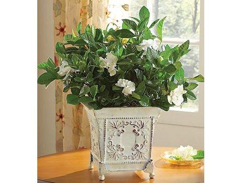 flower,flower arranging,plant,floristry,product,
