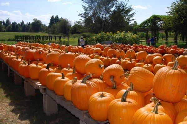Pumpkin Hollow, Piggott, Arkansas