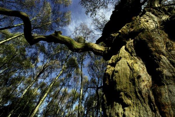 Sherwood Forest (Robin Hood)