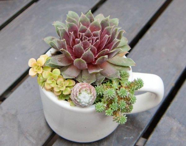 flower arranging,flower,plant,floristry,flower bouquet,