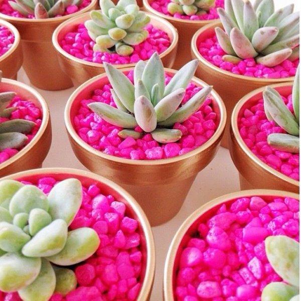 pink,plant,flower,petal,land plant,