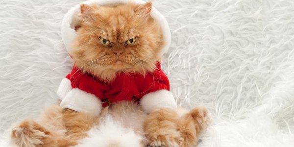 cat, small to medium sized cats, vertebrate, whiskers, cat like mammal,