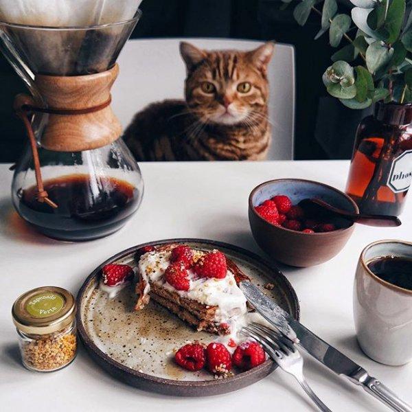 dish, cup, food, meal, ceramic,