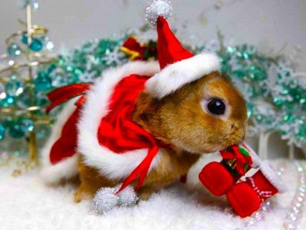 christmas ornament, christmas, holiday, rodent, christmas decoration,