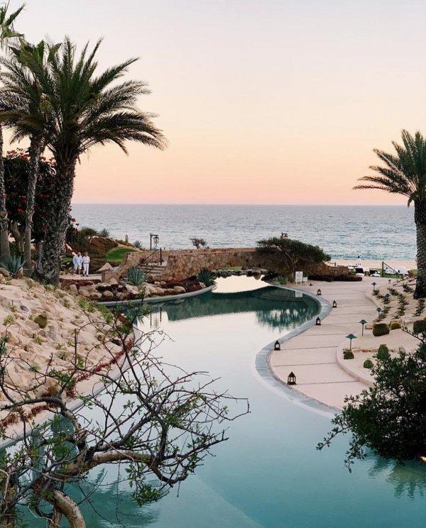 Swimming pool, Tree, Palm tree, Resort, Vacation,