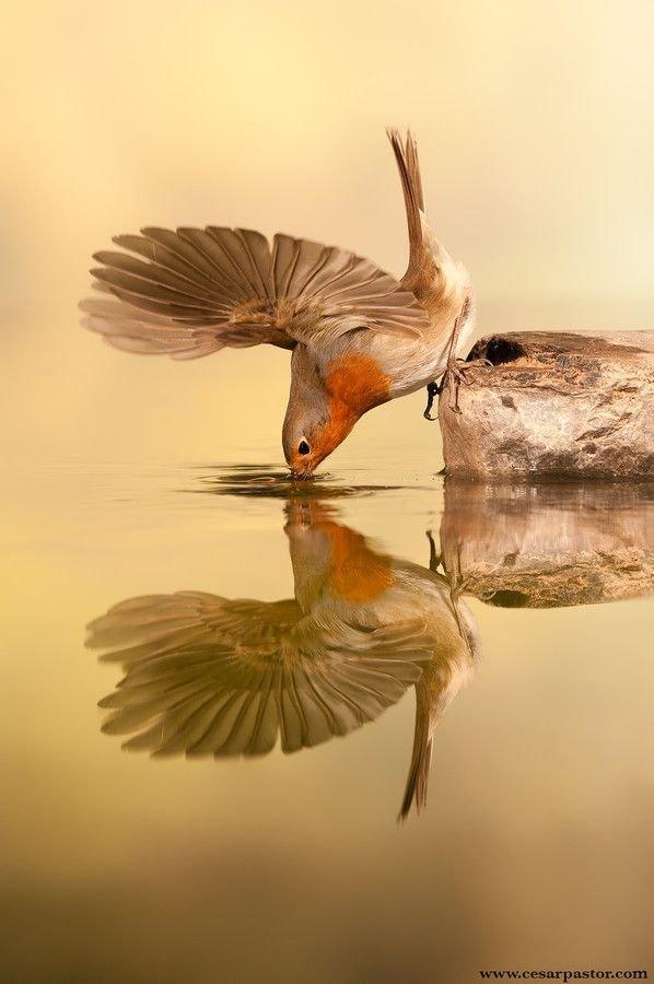bird,beak,vertebrate,fauna,wildlife,