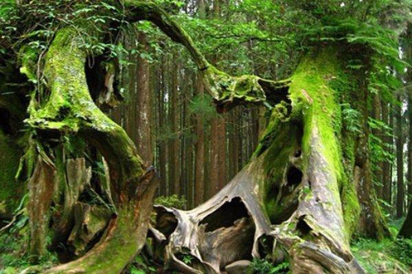 Hoia-Baciu Forest – Romania