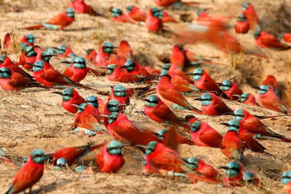Garamba National Park, Democratic Republic of the Congo