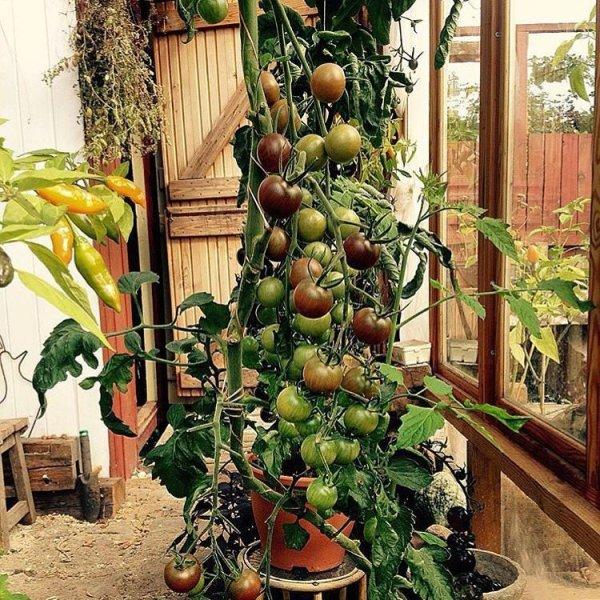 flower arranging, floristry, flora, plant, botany,