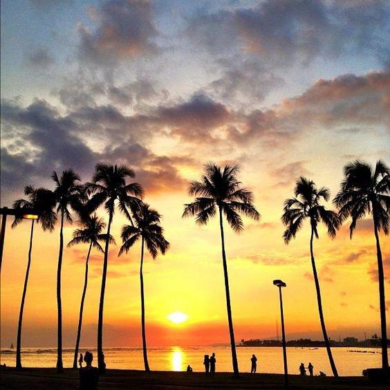 sky, sunset, tree, horizon, cloud,