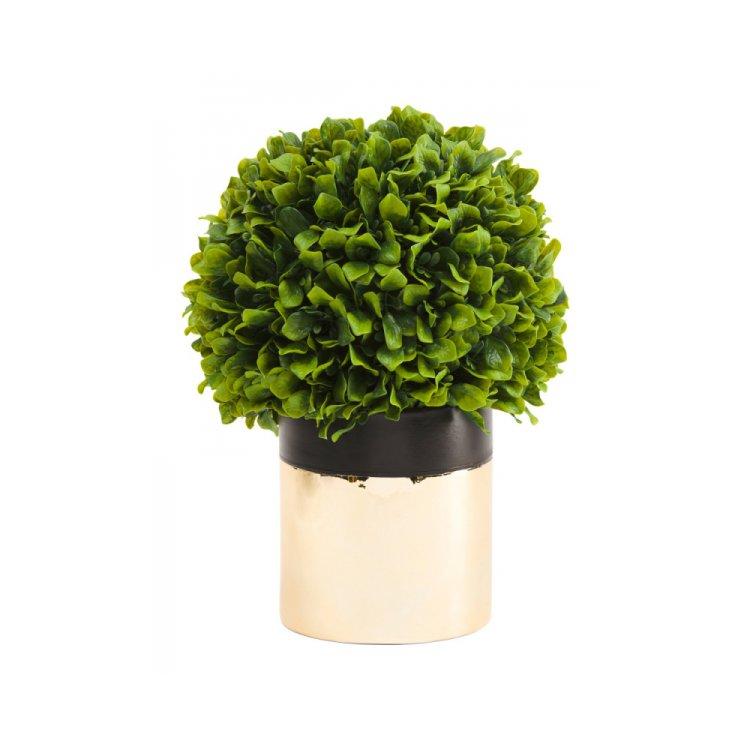 green, plant, tree, flower, land plant,