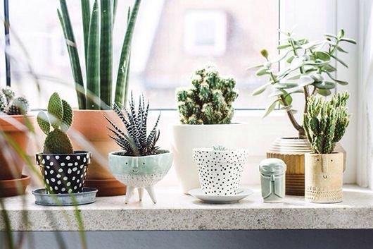 room,plant,floristry,interior design,flower,