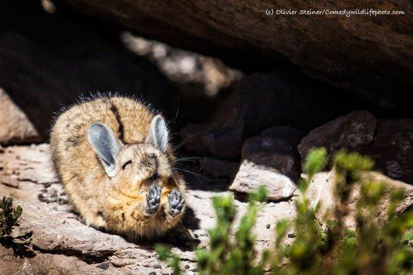 nature, mammal, vertebrate, wildlife, fauna,