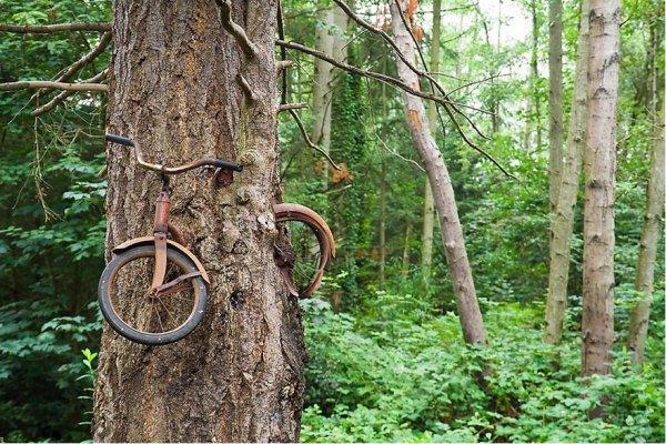 habitat, tree, woodland, natural environment, forest,