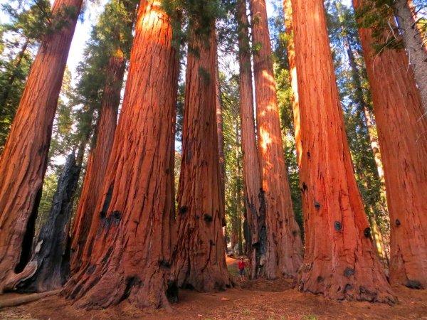 Giant Sequoia National Monument – California, USA