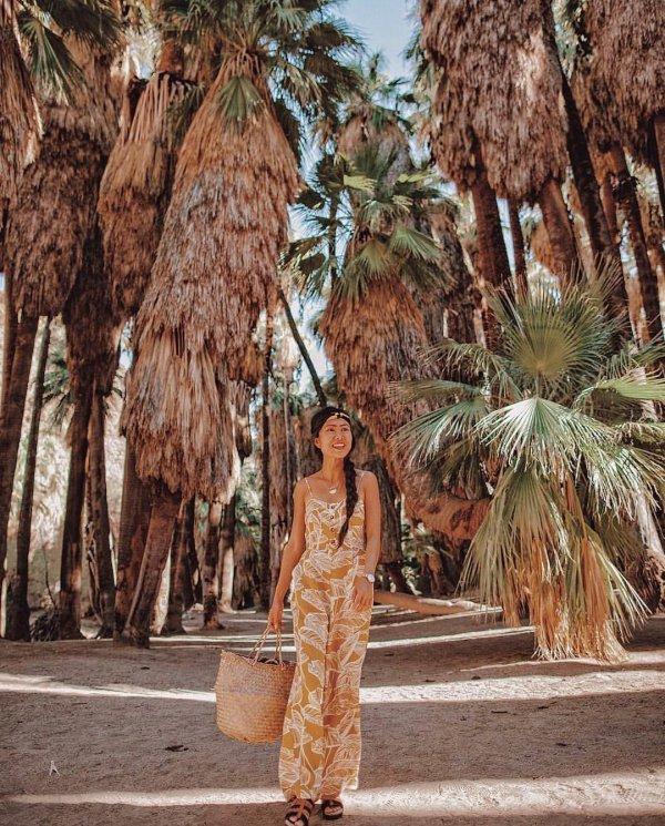 tree, arecales, palm tree, plant, date palm,